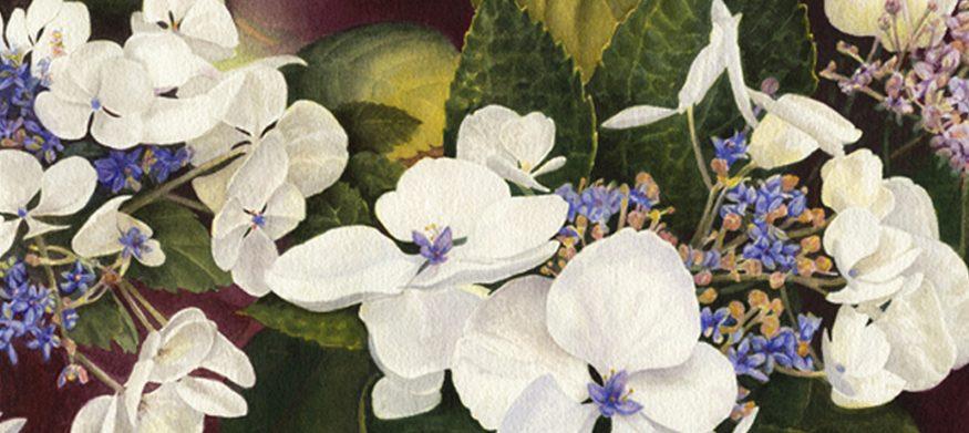 Lace Cap Floral